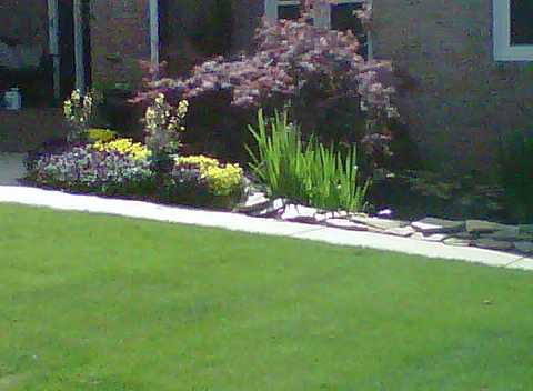 EnviraScape LLC | Various bushes and flowers in a landscaped setting with freshly cut grass