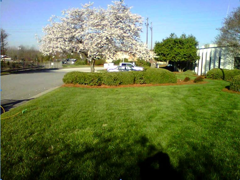 EnviraScape LLC | Trees with flowers surrounded by green shrubs near the side of a street