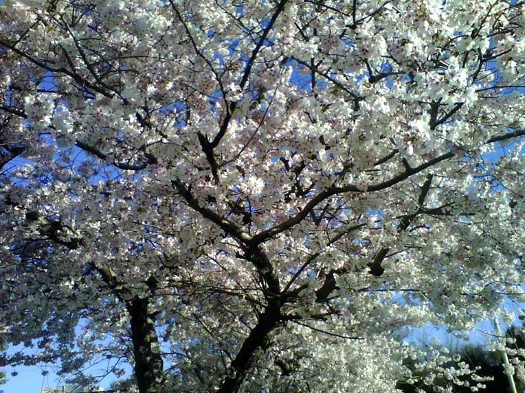 EnviraScape LLC | Dogwood tree with beautiful white flowers in full bloom