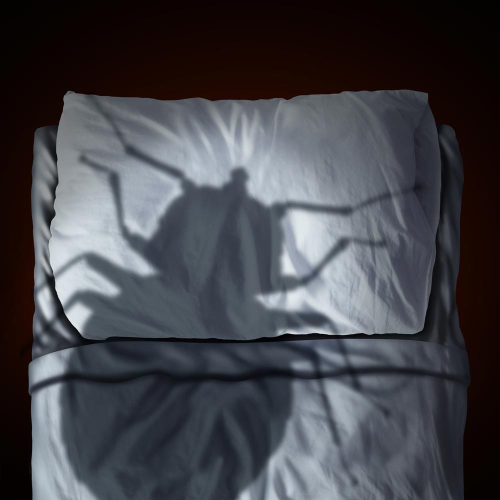 D&W Pest Solutions in Rock Hill, Charlotte and Spartanburg-bed bug control