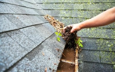 3 Reasons Why Mold on Your Roof Is Harmful